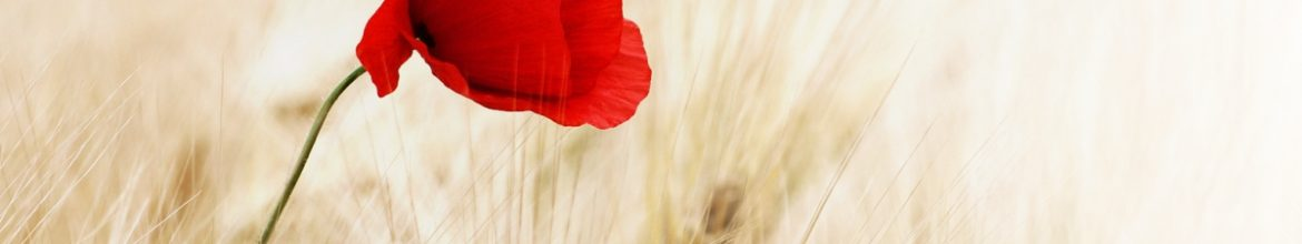 Lest We Forget: Remembrance Day, Sunday November 11